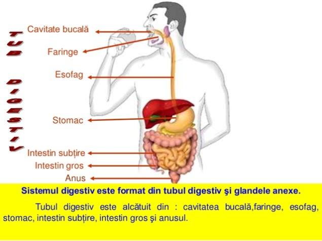 sistemuldigestiv-1-2-638