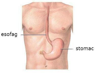 stomac-si-esofag