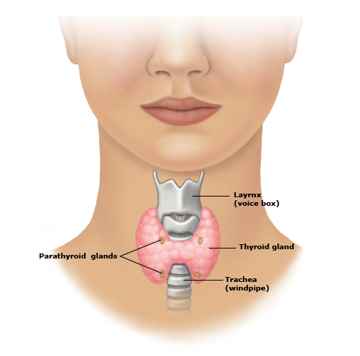 Thyroid_anatomy_PI